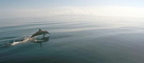 Delfin 1PS