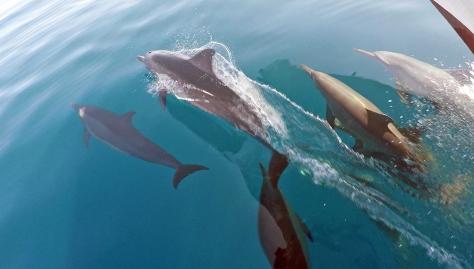 Delfin 2 PS